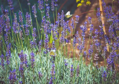 Bees, flowers and butterflys